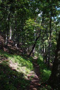 A trail leading through the George Washington National Forest near Douthat State Park in Virginia.